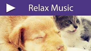 Feline & Canine Relaxation   Music to Calm Cats and Dogs, Peaceful Background