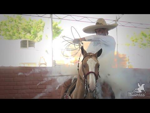 Piales 3 de 3 Enrique Ramirez Perez Arena Vallarta 2017