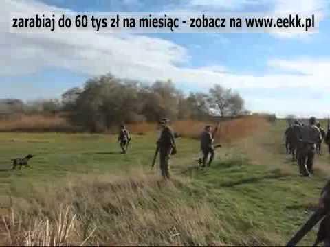 Makabrycznie wielkie polowanie na Dziki Jesień 2008.