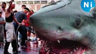Top 15 Biggest Animals on Planet Earth!