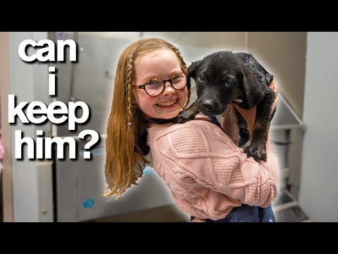10 Year Old Has Only 10 Minutes to ADOPT A PUPPY Emotional
