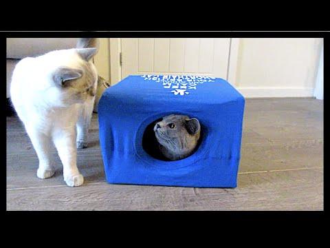 BRITISH SHORTHAIR T-SHIRT CAT BOX! | CHRIS & EVE