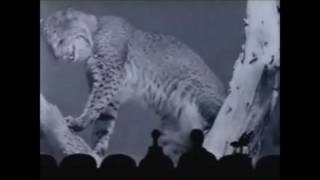 The Best MST3K Shorts (OVER TWO HOURS!!!)