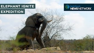 Elephant Ignite Expedition: A world-first adventure across Africa