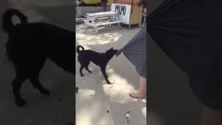 Dog has crush on girl