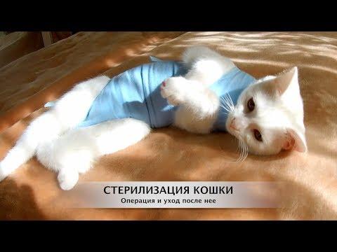 термобелье Этот стерилизация кошки и кота шерсти требует