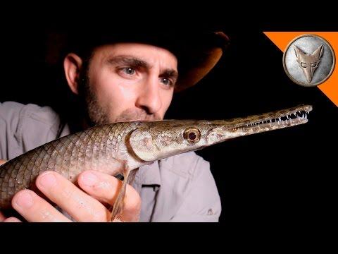 Bizarre Creatures of Texas