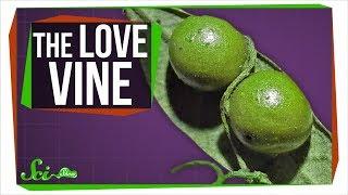The Vine That