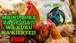 Mbinu Bora za Ufugaji wa Kuku - Kuku wa Kienyeji