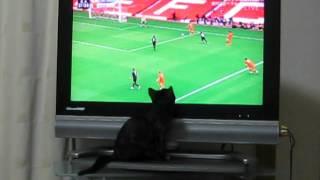 サッカーのテレビ中継に夢中になるネコ