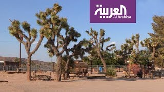 السياحة عبر العربية | بالم سبرينغز مقصد نجوم هوليوود