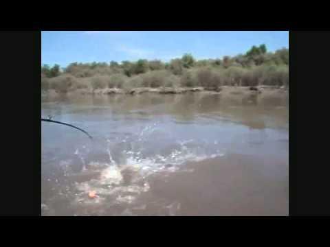 Pesca Tucuman Rio Gastona 9 04 11 DORADO 13 Kls.