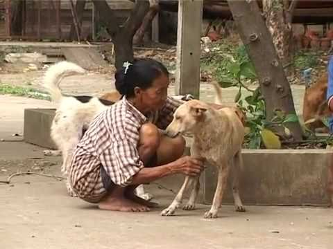 Xxx Mp4 Stray Dogs At The Mercy Of Thais 3gp Sex