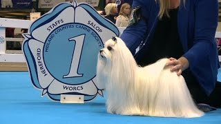 Midland Counties Dog Show 2016 - Toy group Shortlist