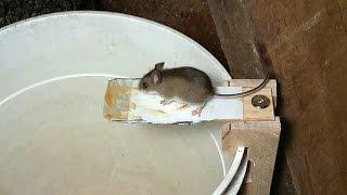 Building a better mouse trap, using video surveillance