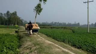 Rangpurete Dekhiya Ailam Vawaiya Song | Uttorer Sur