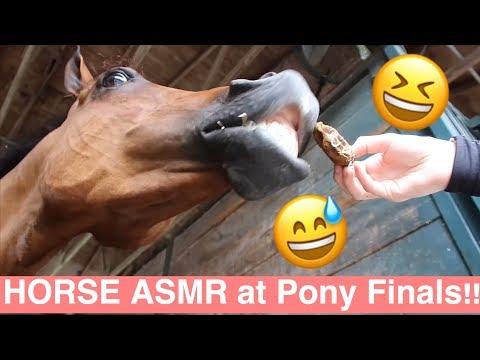 Xxx Mp4 HORSE SHOW ASMR 3gp Sex