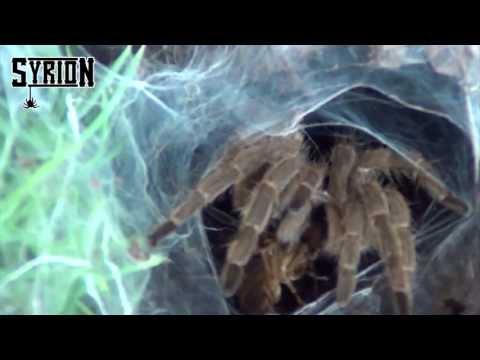Moja hodowla cz. 7 - karmienie pająków, epic feeding time