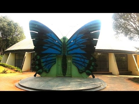 Butterfly Park at Bannerghatta National Park   Bangalore   Karnataka