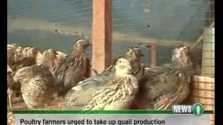 Poultry farmers urged to take up Quail birds production in Northern Ghana 16