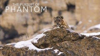 The Pursuit of Phantom Trailer (Documentary on Snow Leopards)