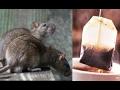 Cara Mengusir Tikus Dari Rumah Dengan Kantong Teh