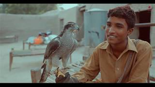 The Art of Falconry in Pakistan