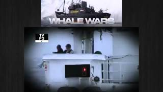 Whale Wars | Season 7 Episode 2 | Fight to the Death