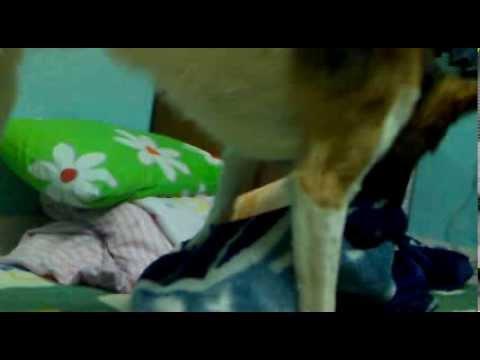 Xxx Mp4 Dog Sex With Banket 3gp Sex