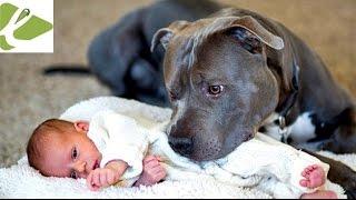 Amenaza a su esposa con cargarse al perro si toca a su hija