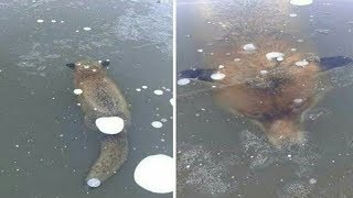 5 animals Found Frozen In Ice