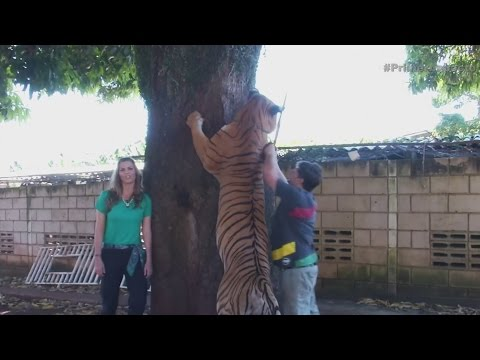 Hombre tiene a siete tigres como mascotas