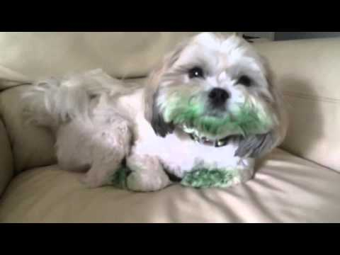 Dog Eats Green Food Coloring