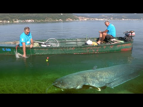 Pecanje soma na Dunavu Bućka Tekija Takmičenje Zlatna bućka Đerdapa Fishing catfish