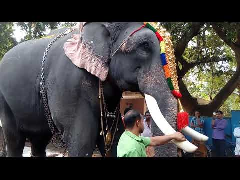 Xxx Mp4 Thrikkadavoor SivaRaju At Arathakanda Temple Nallezhuthumukku Chavara Maholsavam 06 02 2017 Part 1 3gp Sex