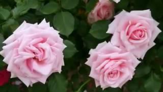 گل های زیبا طبیعی