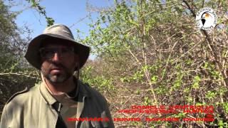 ZAMBIA - KANTANTA HUNTING SAFARIS - BUFFALO HUNT - BIG GAME HUNTING - STEP FOUR