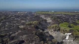 El incendio de Moguer afectó a 8.500 hectáreas