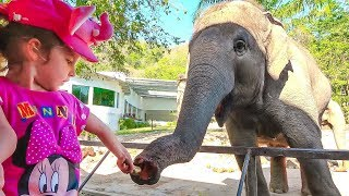 Funny Baby with Baby Doll playing at the zoo and feeds animals Video for kids