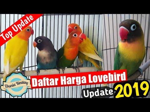 Daftar Harga Lovebird Terbaru | Pecinta burung Lovebird wajib tau