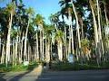 Grote Combeweg Paramaribo - Zus en Zo en Palmentuin 2010