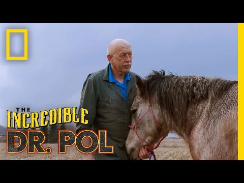 Horse Castration The Incredible Dr. Pol