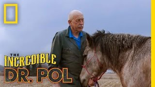 Horse Castration | The Incredible Dr. Pol