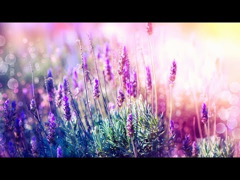 Xxx Mp4 Relaxing Music For Stress Relief Soothing Music For Meditation Healing Therapy Sleep Spa 3gp Sex