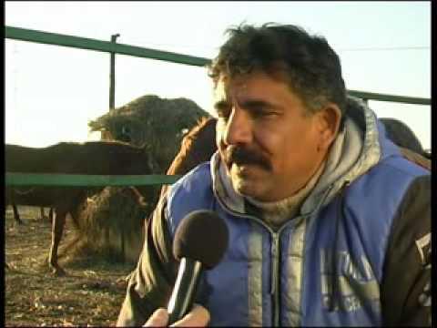 Béla lovasélet