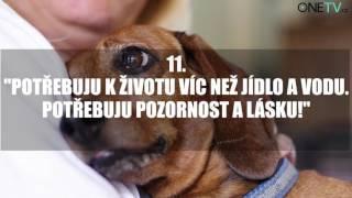 Tohle video by měl vidět každý: 14 vět, které by vám řekl váš pes, kdyby mohl mluvit