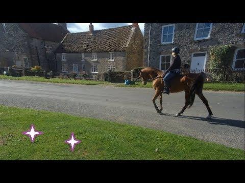 Xxx Mp4 Spooky Arabian Horse Sinnington To Appleton Le Moors N Yorkshire 3gp Sex