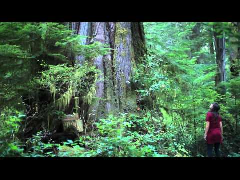The Walbran Valley s Castle Grove Canada s Finest Old Growth Cedar Forest