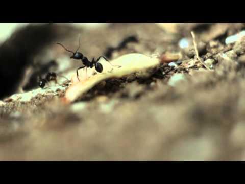 Xxx Mp4 Ants 6 Free HD Stock Footage 3gp Sex