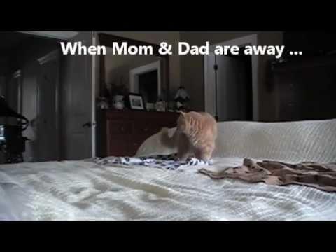 Undercover Video - Cat vs.
